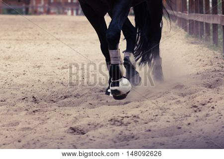 Horse is running fast with the dust from the hooves equestrian sport