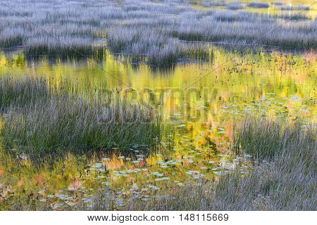 Autumn Colors Reflecting in Lake with Grasses/Reeds