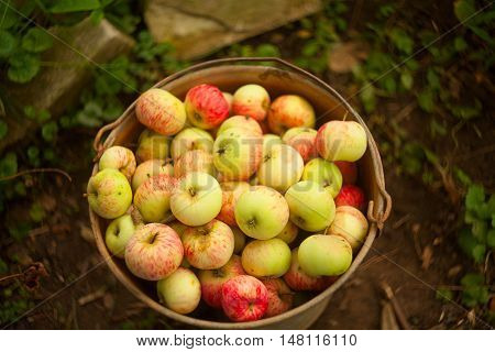 Red Apples On The Table