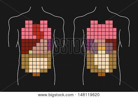 Human body internal organs layout. Anterior and posterior views.