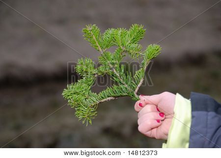 girl holding small plant in hand