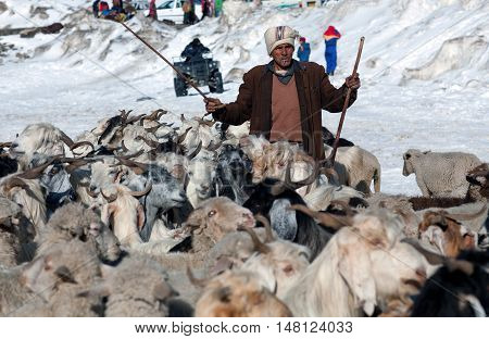ROHTANG LA, INDIA - JUNE 9, 2012: Indian man with goats walking across Rohtang La Pass in the Indian Himalayas, Jammu and Kashmir.
