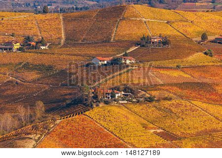 Colorful vineyards on hills of Piedmont, Northern Italy.