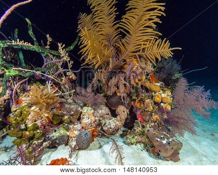 Night Underwater Background With Soft And Hard Corals, Cayo Largo