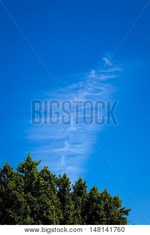 A chem trail dissipates in a cloudless sky over an orange tree in the desert.