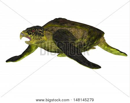 Archelon Turtle Body 3D Illustration - Archelon was a giant marine turtle that lived in South Dakota USA in the Cretaceous Period.
