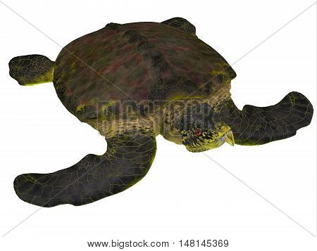 Archelon Turtle on White 3D Illustration - Archelon was a giant marine turtle that lived in South Dakota USA in the Cretaceous Period.