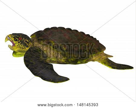 Archelon Turtle Side View 3D Illustration - Archelon was a giant marine turtle that lived in South Dakota USA in the Cretaceous Period.