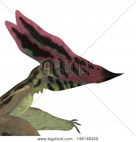 Thalassodromeus Pterosaur Head 3D Illustration - Thalassodromeus was a carnivorous pterosaur that lived in Brazil in the Cretaceous Period.
