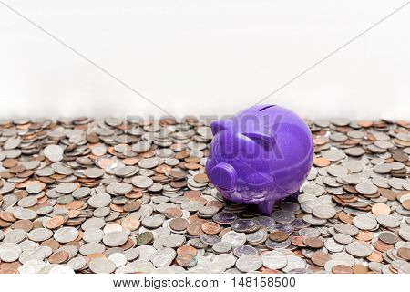 The purple piggy bank finding food above the coins