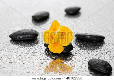 Yellow flower with stones on wet