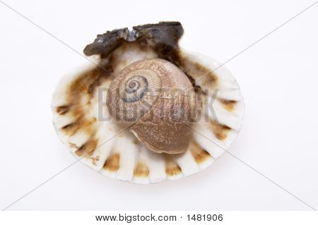 different shaped sea shells on white background poster