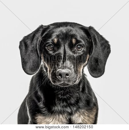 Close-up of Cross-breed puppy, 6 months old, looking at camera, isolated on white