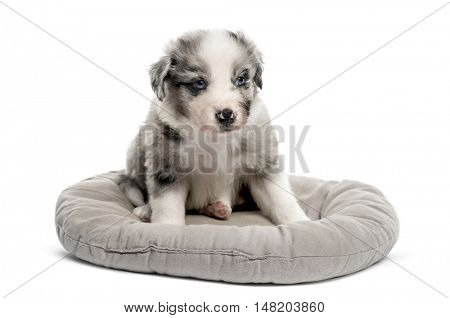 Young crossbreed puppy sitting in a crib isolated on white