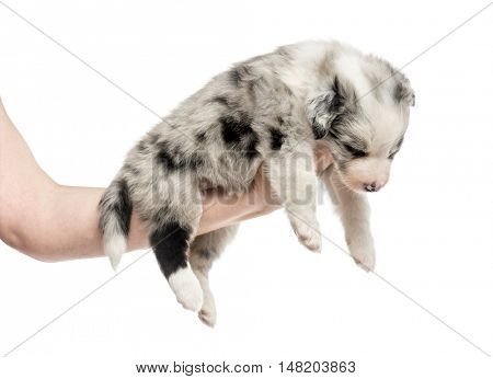 Side view of a hand holding a crossbreed puppy isolated on white