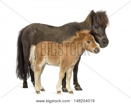 Side view of a Mother poney and her foal against a white background