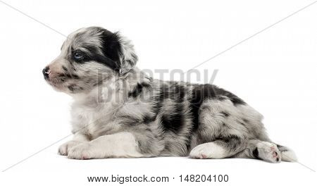 Young crossbreed puppy lying down isolated on white