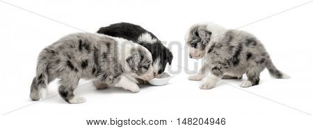 Group of young crossbreed puppies drinking isolated on white