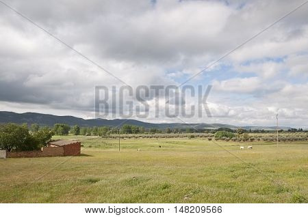 Horses grazing in Ciudad Real countryside Spain