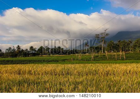 Landscape Sunny Mountain with padi field Ciremai mountain landscape, the picture is taken from a paddy field of location Linggarjati Kuningan, West Java. Date: 23 Agusutus 2016