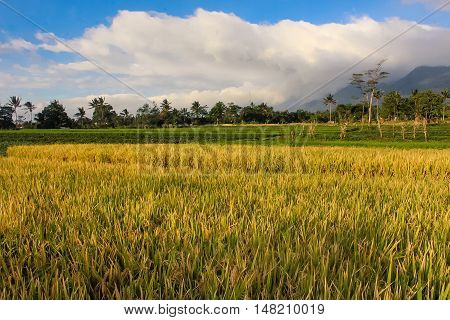 Landscape Sunny Mountain. ( Ciremai mountain landscape, the picture is taken from a paddy field of location Linggarjati Kuningan, West Java. Date: 23 Agusutus 2016)