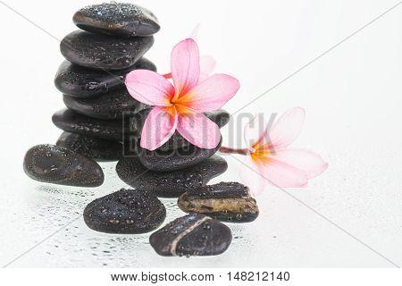 Plumeria flowers and black stones close up