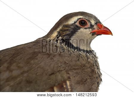 Close-up of a side view of Red-legged partridge, Alectoris rufa against white background