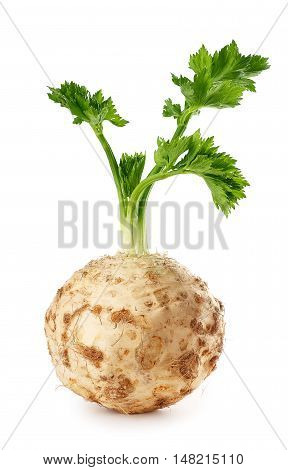 Fresh celery root with leaf isolated on white background vertical photo. Celery isolated on white. Healthy food