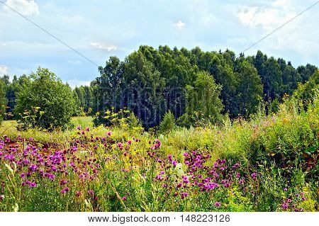 Trees, grass, flowers and the sky in sunny summer day