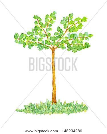 Watercolor Orhamwood or Elm Tree Hand Drawn and Painted Isolated on White