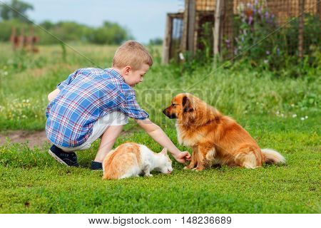 little boy feeds homeless cat and a stray dog the dog sniffs the food and do not wants to eat