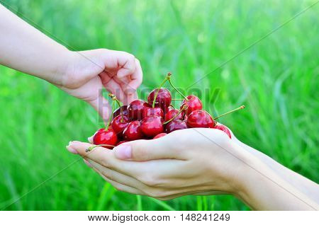 Cherry in women's hands. The child takes the berries from mother's hand on nature background