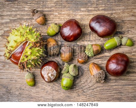 Chestnuts and acorns on wooden plank shot from above