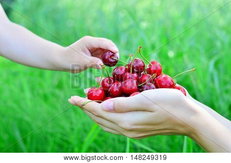 The child takes food from the mother's hands on nature background