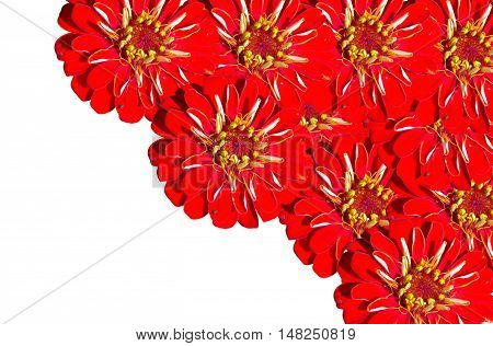 Red gerber are clustered in one corner on a white background