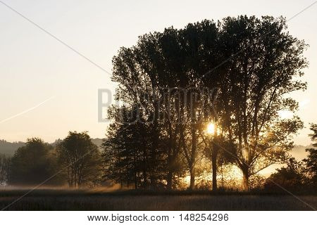 This image shows a  trees at morning