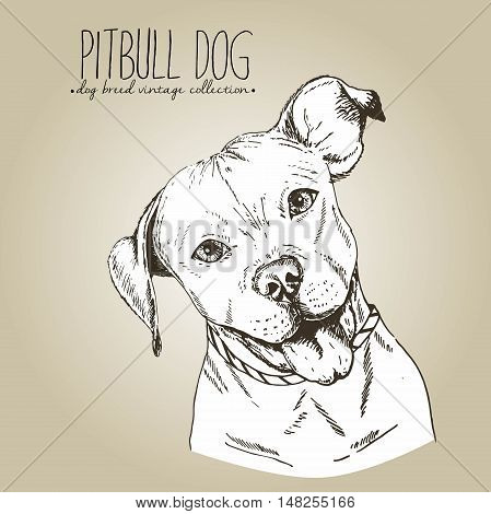 Vector close up portrait of english pitbull. Hand drawn domestic pet dog illustration in shebby vintage style. Isolated on craft brown background.