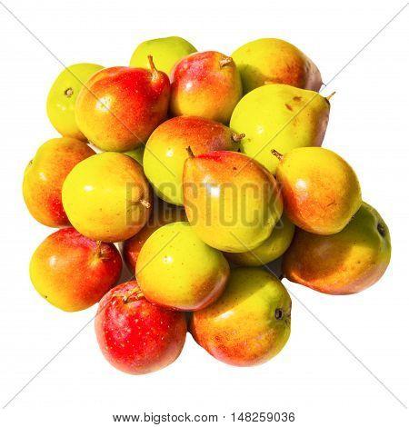 Rowan, berry  red yellow fruit food full of vitamins