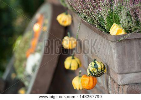 many pumpkins in a garden in germany
