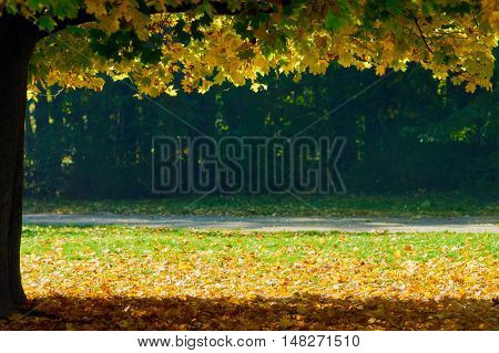 Autumn scenery with dry leaves and sunshine like boarder