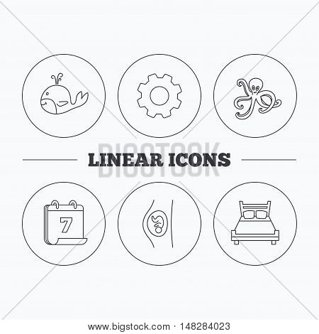 Whale, octopus and double bed  icons. Pregnancy linear sign. Flat cogwheel and calendar symbols. Linear icons in circle buttons. Vector