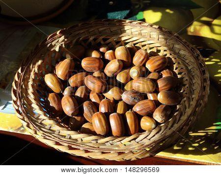 Beautiful oak acorns gifts of autumn. Acorns in a wicker plate