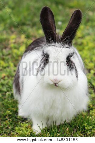 W hite nice  rabbit looking at camera