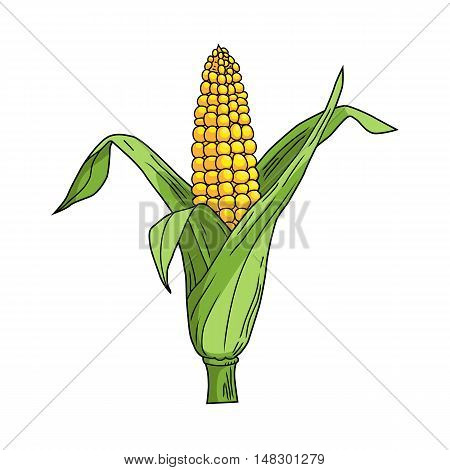 Corncob with leaf on white background. Cartoon style. Yellow vegetable. Vector illustration