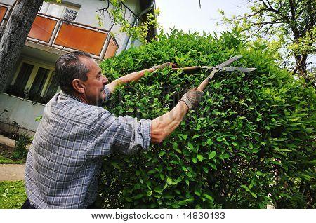 poster of healthy good looking fit adult man outdoor working in garden