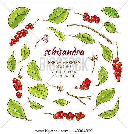 schisandra elements vector set on white background