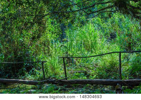 Raw Wooden Bridge In Jungles