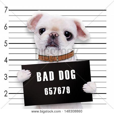 Mugshot funny  image of a bad dog .