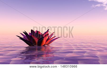 3d illustration water lily floating in the water and sunset