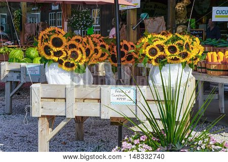 Sunflowers for sale at a local farmers market on Long Island, NY